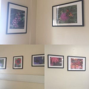 A selection of pictures on ward 11